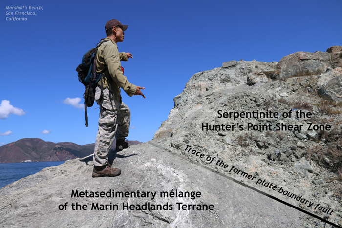 """A geologist is standing on a small hill-like outcrop. The lower portion of the hill (to the left/west) is a gentle slope, made of scaly gray rock, labeled """"Metasedimentary melange of the Marin Headlands Terrane."""". The upper portion of the hill (to the right/east) is a steeper slope, made of chunky greenish rock labeled """"Serpentinite of the Hunter's Point Shear Zone."""" Between the two rock types is a line, labeled """"Trace of the former plate boundary fault."""" The fault dips to the right/east."""