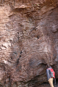 A geologist examines a cliff made of wavy, wiggly forms of folded chert layers.