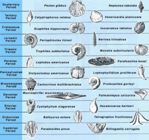 Faunal Succession through geologic time. Certain fossils are widespread in certain time intervals and can come to define them. Over time, they represent evolutionary change.