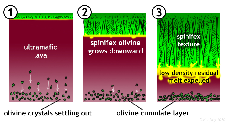 "3-stage diagram showing the ""top-down"" growth of spinifex texture in an ultramafic lava flow. In the first stage, a thin crust has formed at the top of the flow, and in the interior of the flow, chunky olivines are nucleating and settling to the bottom. In the second stage, spinifex olivine begins to grow downward from the solid upper surface into the liquid interior of the flow. In the third stage, the spinifex has gotten very long, about 2/3 the thickness of the flow, and as the spinifex olivine grow downward (the only direction they can grow!), a low-density remaining liquid is expelled from the crystallization front. Meanwhile, at the bottom of the flow, the chunky olivines have settled out to form a cumulate layer."