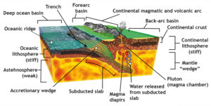 A diagram showing the features of a subduction zone, such as Claifornia during the Mesozoic. A slab of oceanic lithosphere is being generated at an oceanic ridge system, then being transported to the right, and being subducted down and under an overriding plate of continental lithosphere. At the interface between the two is an accretionary wedge complex. Also shown is the generation of magma via water released from the subducted slab, and that magma feeding a continental volcanic arc. Weathering and erosion of that mountain range generates sediments, which are transported downhill and deposited in forearc and back-arc basins.