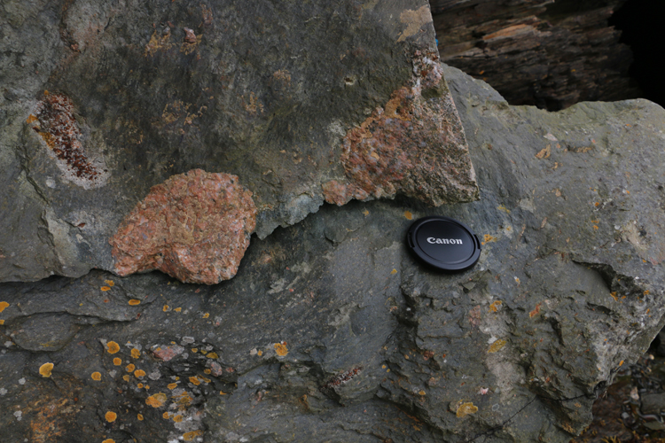 Photograph showing several outsized pink granite clasts in metadiamictite. A lens cap provides a sense of scale.