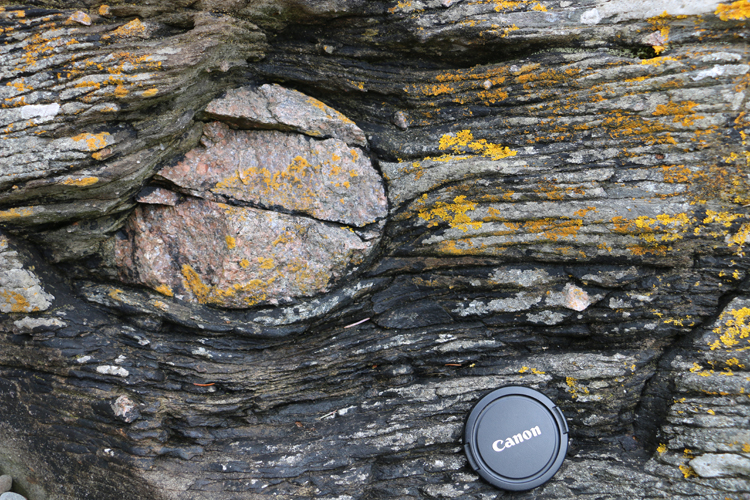 Photograph showing a large round outsized granite clast in layered metadiamictite. A lens cap provides a sense of scale.