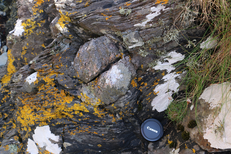 Photograph showing an outsized clast in lichen-covered metadiamictite. A lens cap provides a sense of scale.
