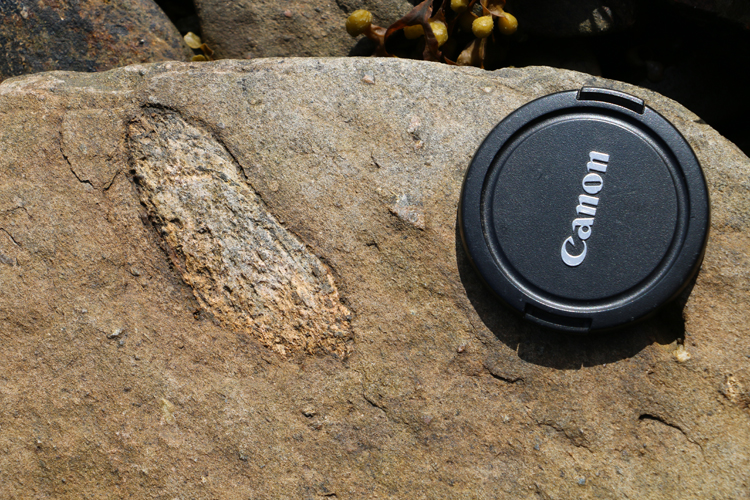 Photograph showing an outsized gneissic clasts in metadiamictite. A lens cap provides a sense of scale.