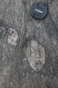 Photograph showing two outsized granite clasts in metadiamictite. A lens cap provides a sense of scale.
