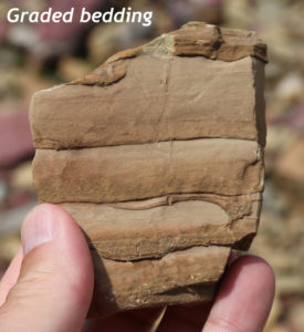 Photograph showing a handheld sample of limestone with 5 graded beds, viewed in cross section. The sample is about 8 cm tall, and the beds vary in thickness between 1 cm and 2 cm. Each is coarse grained and dark at the bottom, and gets finer and lighter-colored at the top. The coarse part of each layer begins abruptly and is more resistant to erosion than the upper fine part of each layer.