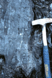Photograph showing skinny columnar stromatolites in cap carbonate. A rock hammer provides a sense of scale: each stromatolite is about 2-3 cm in diameter, but half a meter tall (at least!).