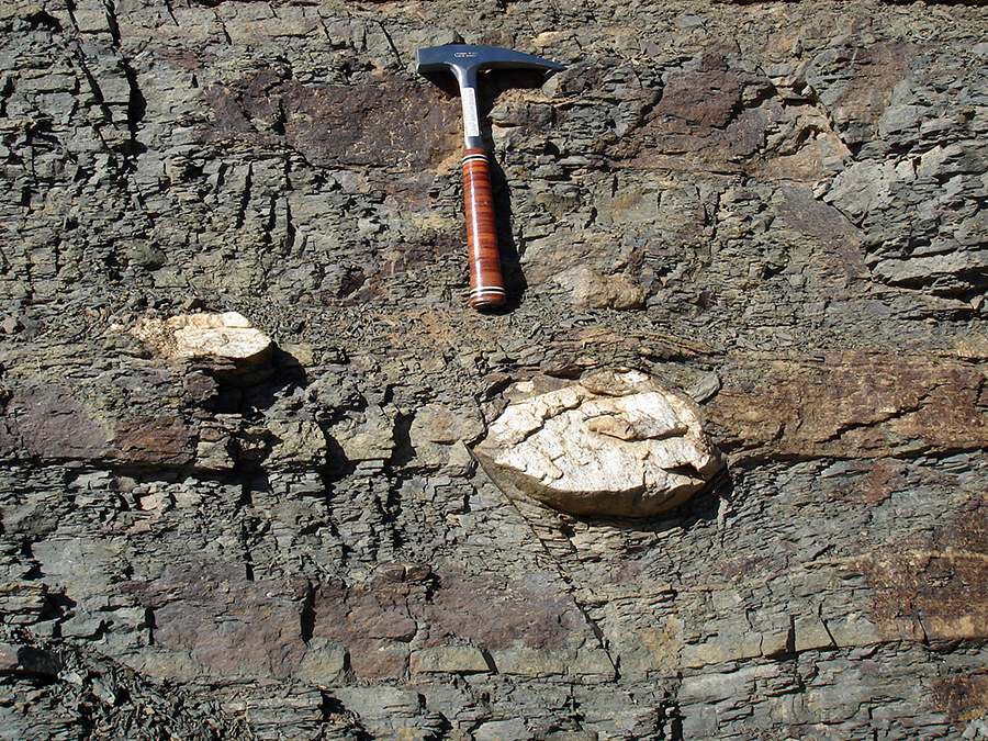 Photograph of a pair of white dropstones in a medium-gray mudrock, with a rock hammer for scale.
