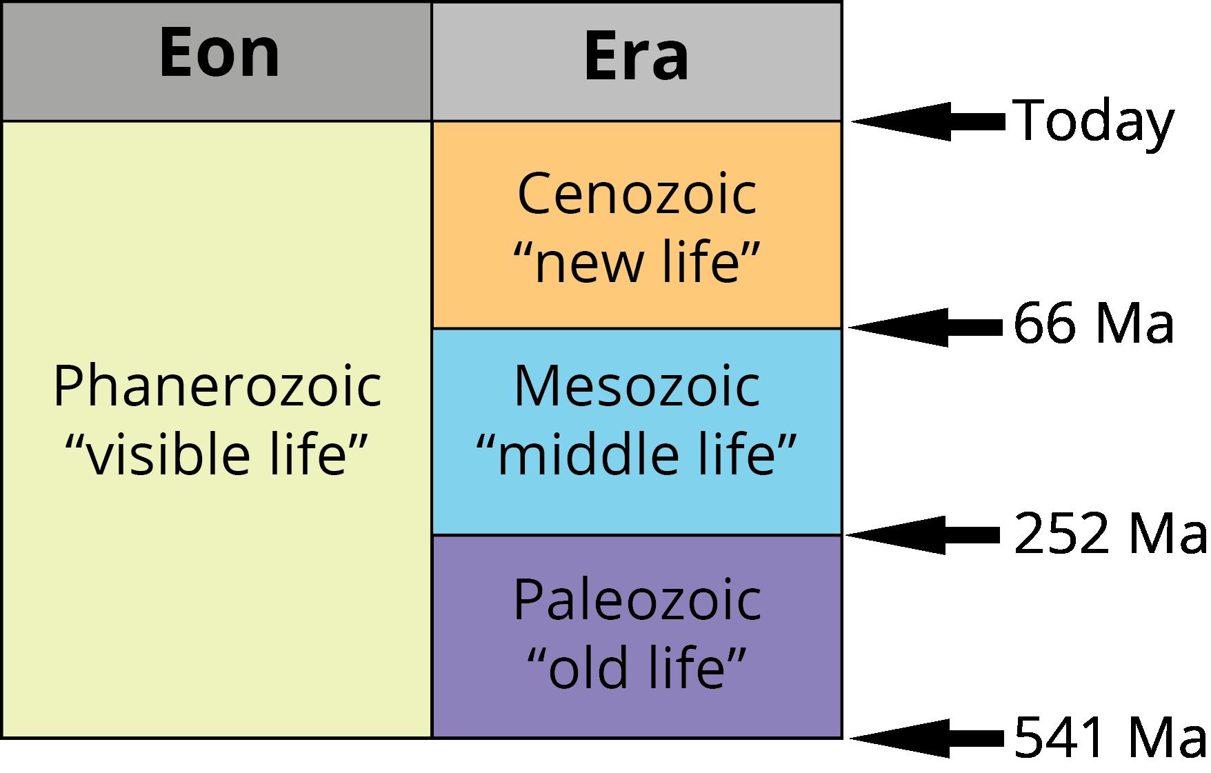 The three eras of the Phanerozoic eon. Image by Jonathan R. Hendricks. Creative Commons License This work is licensed under a Creative Commons Attribution-ShareAlike 4.0 International License.