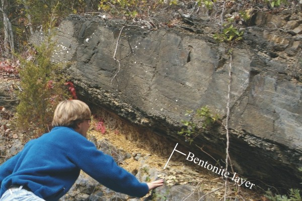 Photograph showing an outcrop of bentonite (labeled) between limestone layers. The bentonite is yellowish-tan in color, and very crumbly. It has been eroded away more rapidly than the layers above and below it, making a recessed hollow in the outcrop. The layers are all tilted moderately to the right. A geologist is looking at the outcrop, and provides a sense of scale.