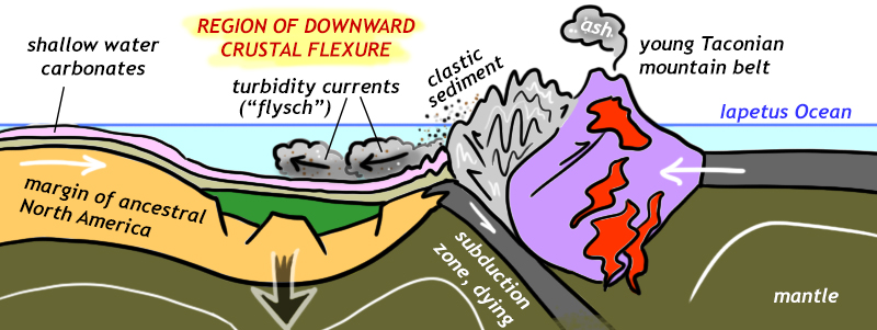 A cartoon cross-section showing the deepening of the sedimentary basin adjacent to the young Taconian mountain belt, as the edge of ancestral North America flexes downward. Turbidity currents flow into this deepened basin.