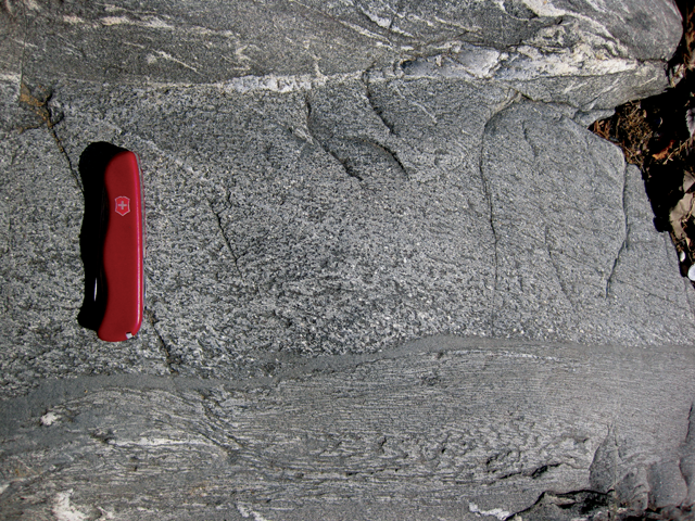Photograph showing a graded bed in lightly-metamorphosed meta-turbidites. Some quartz veins are also present. A pocket knife provides a sense of scale: the graded bed is about 20 cm thick.