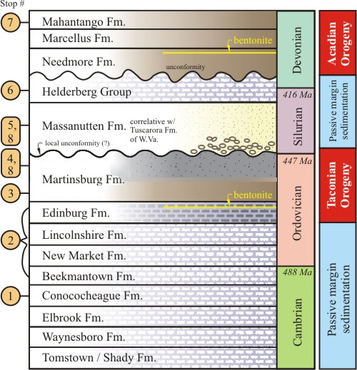 A cartoon stratigraphic section, showing the layers explored on this virtual field experience, with geologic age noted and a tectonic interpretation on the far right. The Tomstown, Waynesboro, Elbrook, Conococheage, Beekmantown, New Market, and Lincolnshire Formations are all representative of passive margin sedimentation, while, the Edinburg Formation and Martinsburg Formation show the clastic influence of the Taconian Orogeny. The Massanutten Formation and the Helderberg Group show a return to passive margin conditions, and the Needmore, Marcellus, and Mahantango Formation show the clastic influence of the Acadian Orogeny.