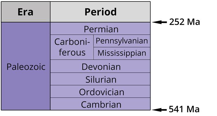 The seven periods of the Paleozoic era. Image by Jonathan R. Hendricks. Creative Commons License This work is licensed under a Creative Commons Attribution-ShareAlike 4.0 International License.