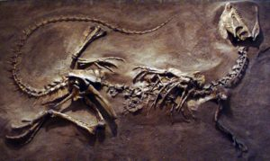 This shows the bones of the animal.