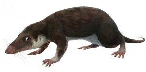 It is a small shrew-like animal.