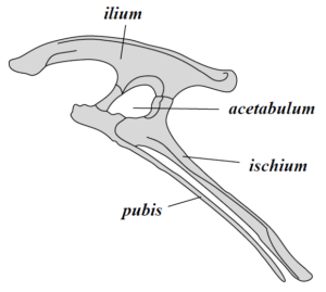 Closed structure of a pelvis