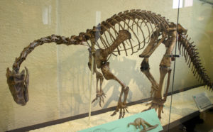 The picture shows a mounted skeleton.