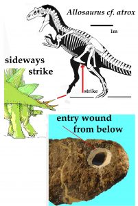 There is a hole in the bone from the spike