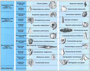Some common index fossils (Source: USGS)