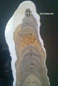 The stalagmite that defines the Meghalayan Age (Source: BBC).