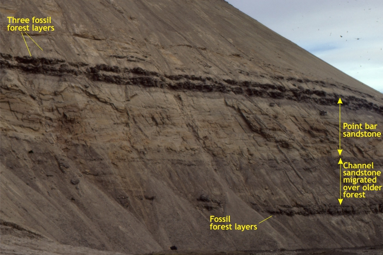 Point bar deposits overlain by fossil forest layers
