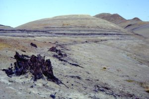 A 45 million year old tree strump on Geodetic Hills
