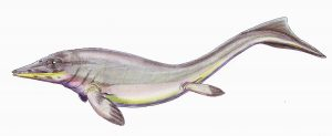 The animal is long with somewhat-developed fins