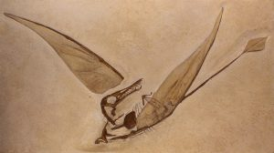 The animal is beautifully fossilized, including the wing membranes.