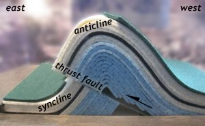 Annotated photo of a simple felt model of a broken asymmetric anticline/syncline pair. Dozens of layers arch up in the middle (an anticline) that has its short limb on the left (east) and its long limb on the right (west). It's broken at its base along a thrust fault. Distinctive colored layers show that the offset direction is to the east, with the hanging wall moving up relative to the footwall. The anticline has climbed up and over its partner syncline.