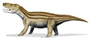 Artistic rendering of Cynognathus sp.