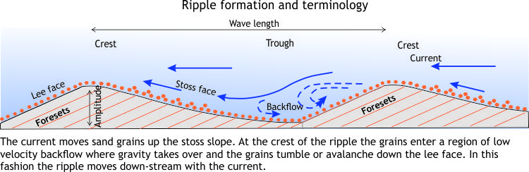 Diagramatic view of ripple formation and terminology