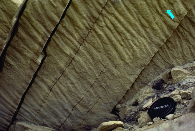 close spaced flute casts possibly associated with a shelf storm surge, Eocene, Canadian Arctic