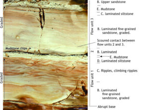 Three fine-grained turbidites with B to E intervals, Early Miocene, New Zealand