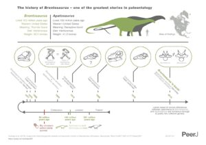 It shows the different skull ideas that have existed, Brontosaurus as invalid, and Brontosaurus as valid again in the end.