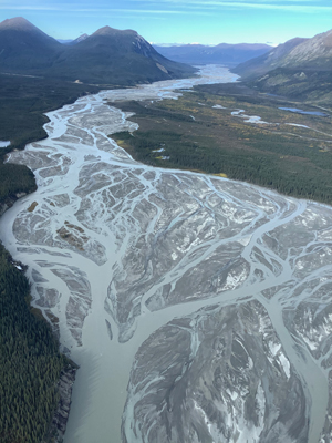Aerial photograph of the Donjek River, a modern braided river, Yukon Territory, Canada. A wide river valley between mountain ranges is shown, with about half the valley's width covered by a vast, shiny fresh deposit of gray gravel sediment. Countless branching and re-merging channels are full of gray/blue suspended sediment. The remainder of the valley has scrubby forest covering it. The mountain slopes are bare - suggesting a very cold climate.