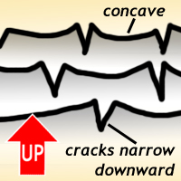 """Cartoon cross-section showing mud crack morphology: cracks narrow downward, and widen upward. Further, the mud polygons curl up at their edges, producing concave-up """"dish"""" shapes."""