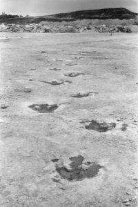 The three-toes tracks are all moving in the same direction.