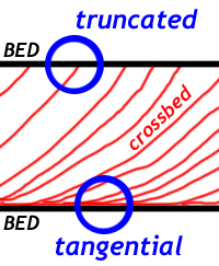 A sketch showing how cross-beds approach parallel with the main bed's bottom, but at the top of the bed, erosion has removed the tangential portion, resulting in a truncated contact. Another way of putting this is that the angle between the crossbed and the mainbed is typically small at the bottom (close to parallel) and larger (around 32 degrees or so in dry sand) at the top.