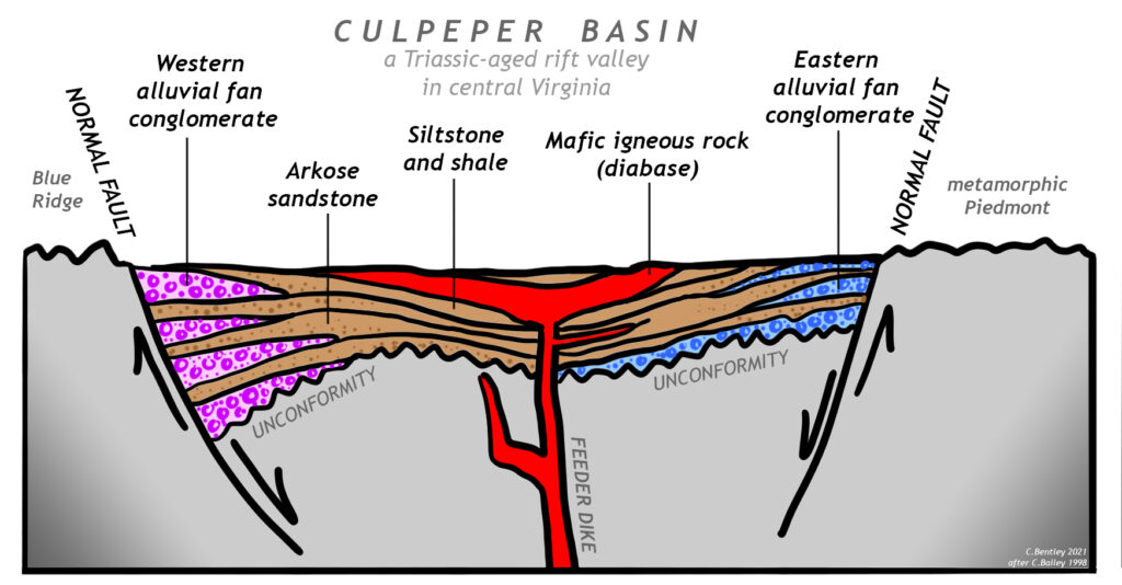 """Cartoon cross-section of the Culpeper Basin, a Triassic-aged rift valley in central Virginia. The cross-section shows the valley flanked by two normal faults: it is a central down-dropped """"graben."""" At the bottom of all the sedimentary rocks filling the rift basin is an unconformity. West of the western fault is the Blue Ridge. East of the eastern fault is the metamorphic Piedmont. The rift basin is coarsest at the edges, with wedge-shaped deposits of alluvial fan conglomerate reaching out into the basin. The composition of the eastern conglomerate is different from the composition of the western conglomerate. Arkose sandstone flanks the conglomerate, but in the middle of the basin is the finest sediment: shale and siltstone. Cutting through all of these clastic sediments is a prominent central mafic igneous intrusion. A feeder dike reaches up and intrudes sills parallel to sedimentary layering. It is labeled """"Mafic igneous rock (diabase)"""")"""