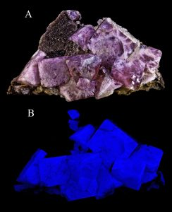 Purplish crystals of fluorite. The second image shows the deep blue fluorescence of fluorite under ultraviolet light.