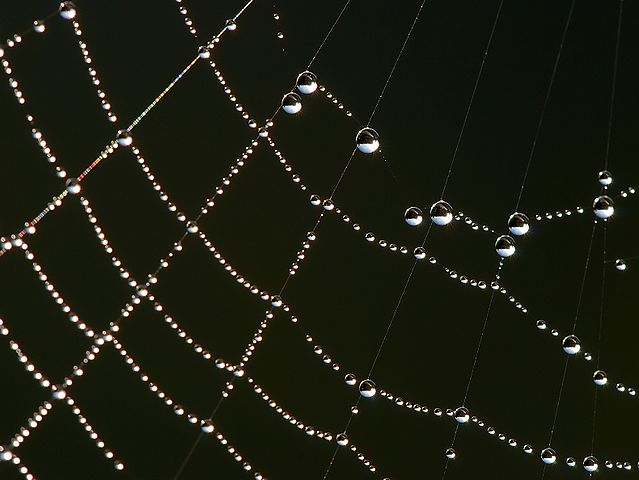 The water drops are sticking to a spider's web