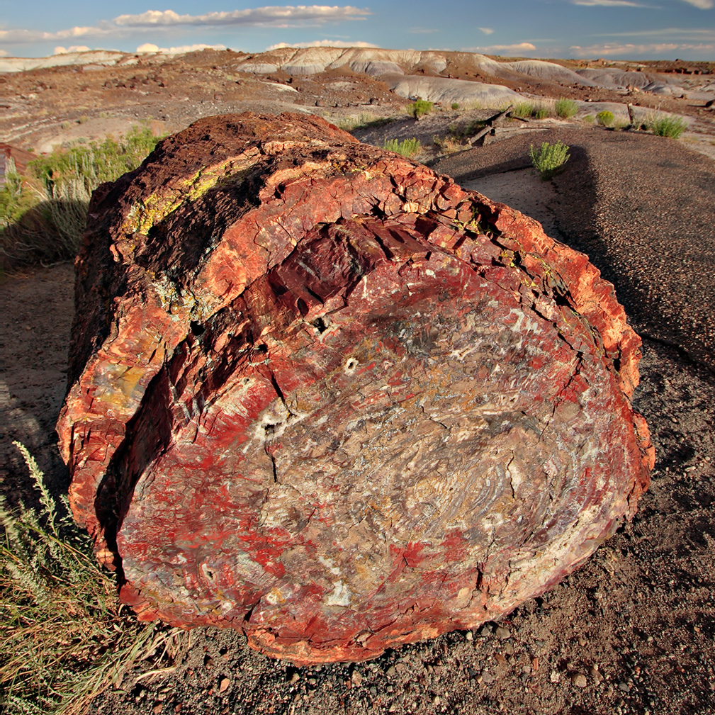 Photo of log of petrified wood showing structures of the original wood