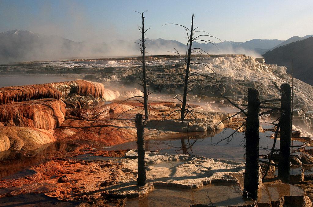 Calcium carbonate deposited at Mammoth hot springs encapsulates trees.