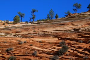 Image of cross bedding in ancient sand dunes at Zion National Park, Utah.