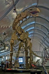 The dinosaur is huge! 130' long and 24' high.