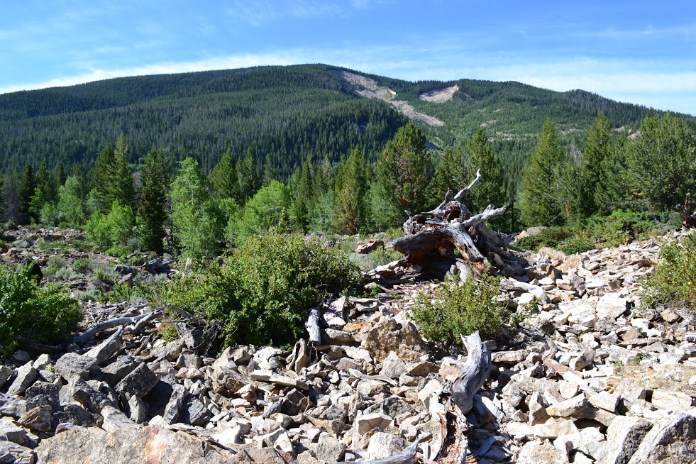Scar of the Gros Ventre landslide in background with landslide deposits in the foreground.