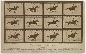 There are 12 images of the horse, at least one has the legs off the ground.
