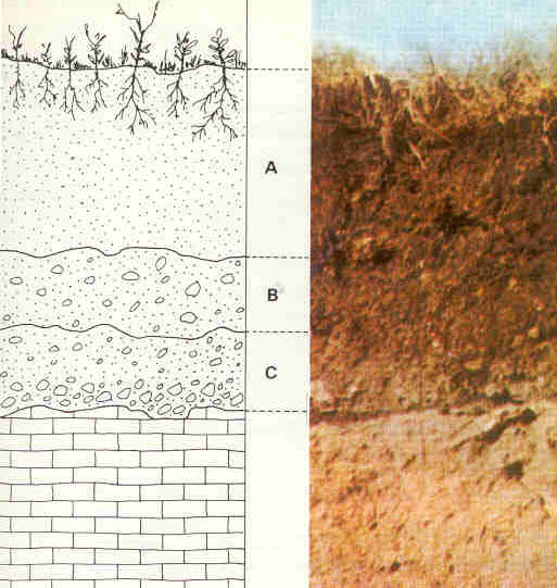 The soil is sketched and labeled.